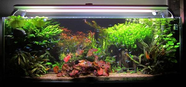 سیستم روشنایی لامپ آکواریوم گیاهی