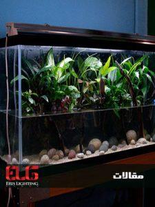 سیستم روشنایی و نور آکواریوم گیاهی